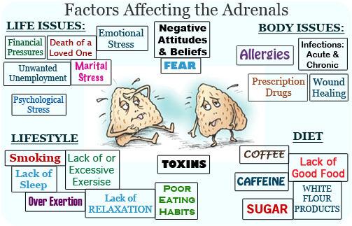 Factors affecting the adrenals