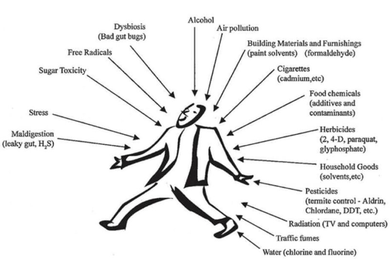 Detox Heavy Metals and Chemicals